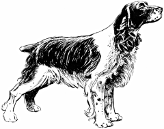 Did Lincoln own a spaniel? (Spaniel, by Pearson Scott Foresman. {PD})